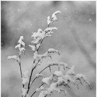 Белое на черном. :: Paparazzi