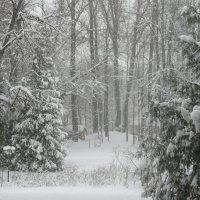 За окном снегопад :: Виктор