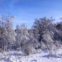 Зимушка-зима :: Ирина
