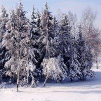 Сказка зимняя :: Ирина