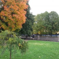 Осень :: Svetlana Lyaxovich
