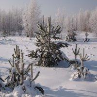 В зимнем лесу :: ГАЛИНА Баранова