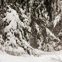 Зима в лесу :: Александр