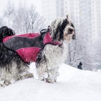 Бия в снегу :: Лариса Батурова