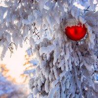 Зима продолжается... :: Алексей Белик