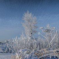 """""""Зимы ждала, ждала природа, Снег выпал только в январе..."""" :: Михаил (Skipper A.M.)"""