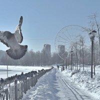 Зима в городе :: Сергей Розанов