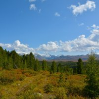 Верхняя граница кедрового леса. :: Валерий Медведев