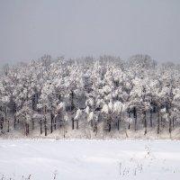 Зима2 :: Татьяна Ясенкова