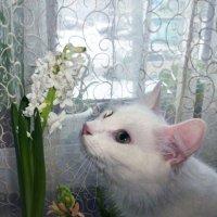 Запахло весной! :: Елена Грошева
