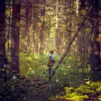 В лесу. :: Андрей Леднев