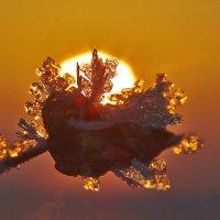 в лучах заката :: Седа Ковтун