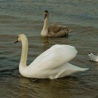 Один белый другой серый :: Михаил Новиков