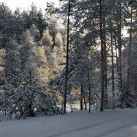 И тишина бывает одинокой... :: Лесо-Вед (Баранов)
