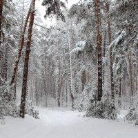 Мерцая невесомостью снежинок... :: Лесо-Вед (Баранов)