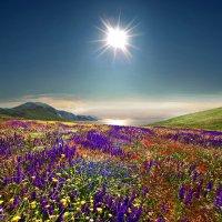 весенний карнавал цветов :: viton