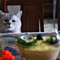 И коту масленница :: олег свирский