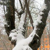 Зимний этюд :: Нина Бутко