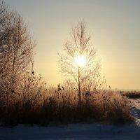 Зимнее утро :: Александр Кубасов