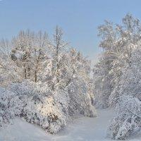 Зимний парк :: Алексей Михалев