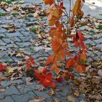 Осенний этюд :: Светлана