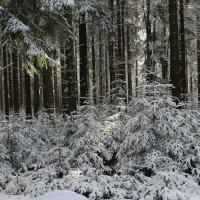 Зимой в лесу :: Mariya laimite