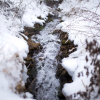 Природа зимой :: Viktoria Shakula