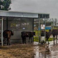 Спрятались от дождя... :: Анна Пугач