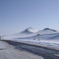 и это южный Казахстан! :: vladimir polovnikov