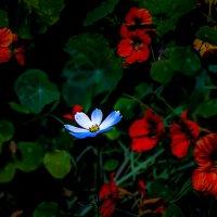 беленький цветочек- ночью :: Кузнецов
