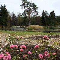 Верхний пруд в южной части парка :: Елена Павлова (Смолова)