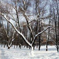 Y дерево :: Alex Sash