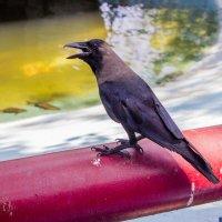 Ворона каркнула... :: Михаил Юрин