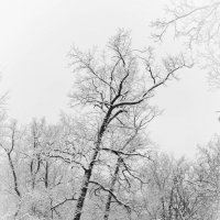 Графика зимнего леса :: Андрей Нибылица