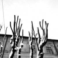 Hands of Nature :: alexander zvir