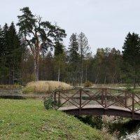 В южной части парка :: Елена Павлова (Смолова)