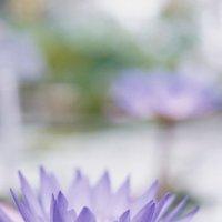 Квітка :: Танюша