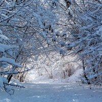 Мороз и солнце! :: Наталья