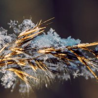 Снежинка... :: Леся Гуфраева