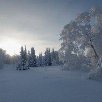 Маленьким ёлочкам холодно зимой!!! :: Олег Кулябин