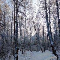 Февраль лежал в дремотной неге ... :: Татьяна Котельникова