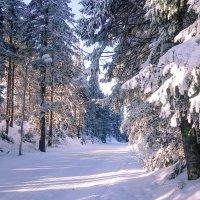 Зима :: Михаил Рехметов