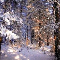 Зимний лес :: Михаил Рехметов