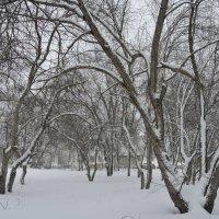 в снегу :: Владимир Коваленко
