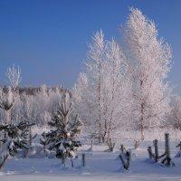 Зима :: ГАЛИНА Баранова