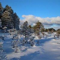 Свежий морозный февраль :: Татьянка *