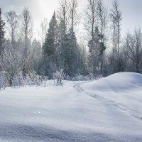 Зимний день в Подмосковье :: Владимир Буравкин