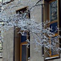 Морозный Февраль. :: Марина Харченкова