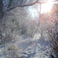 Мороз и солнце :: Денис Матвеев