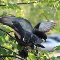 Птицы. :: венера чуйкова